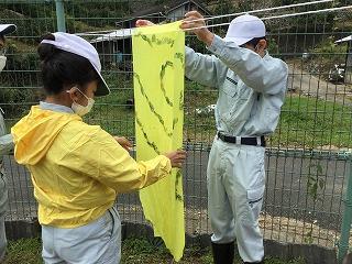 オオキンケイギク染め:オオキンケイギクで染めた竹紙を干す作業